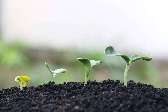 Агролайфхак: оптимальна кількість азоту в ґрунті фото, ілюстрація