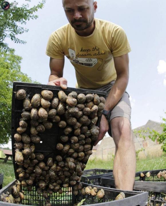 Фермы улиток на Житомирщине (ВИДЕО) фото, иллюстрация
