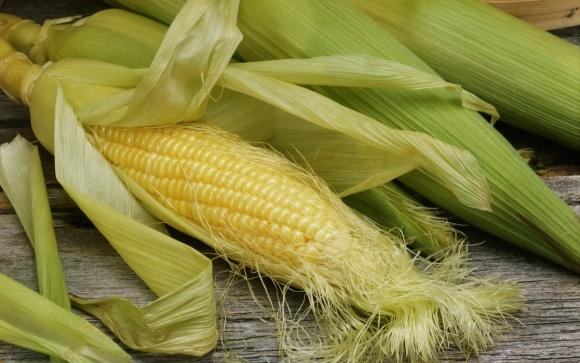 Прогноз міністерства сільського господарства США: світове виробництво кукурудзи в 2018/2019 МР буде збільшено фото, ілюстрація