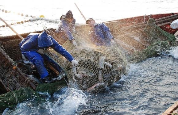 В Украине усилят контроль за безопасностью рыбы и рыбопродуктов фото, иллюстрация
