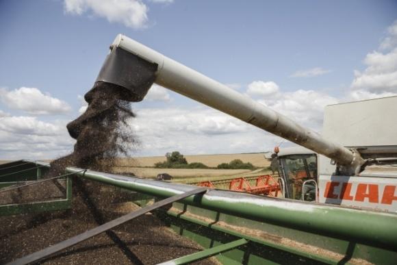 Очередное снижение прогноза урожая рапса в ЕС поддержало котировки фото, иллюстрация