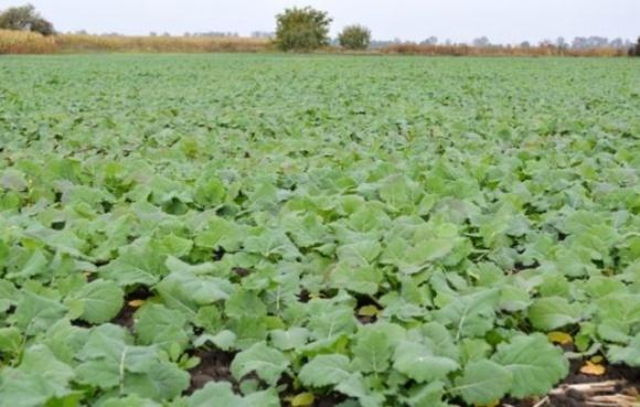 Украинские аграрии из-за отсутствия осадков в этом году уменьшили посевы озимых культур фото, иллюстрация
