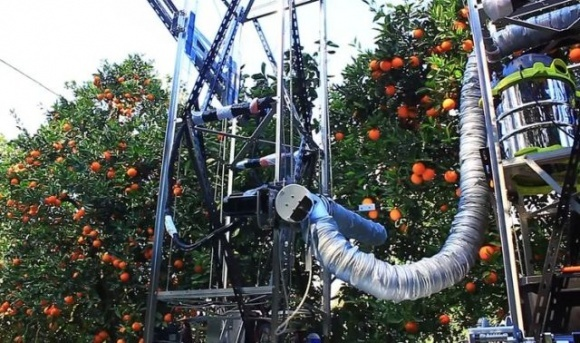 Робот збиратиме комерційний урожай яблук фото, ілюстрація