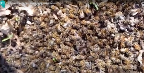 На Ровенщине массово гибнут пчелы  фото, иллюстрация