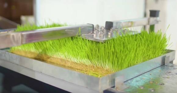 Роботы на вертикальной ферме увеличили продуктивность в 4 раза фото, иллюстрация