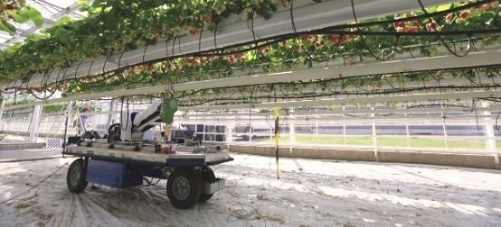 Бельгийцы изобрели робота-сборщика земляники садовой фото, иллюстрация