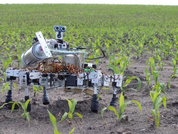 Роботов научили сажать семена и находить больные растения фото, иллюстрация
