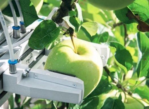 В Беларуси начнут выпускать роботов для уборки яблок фото, иллюстрация