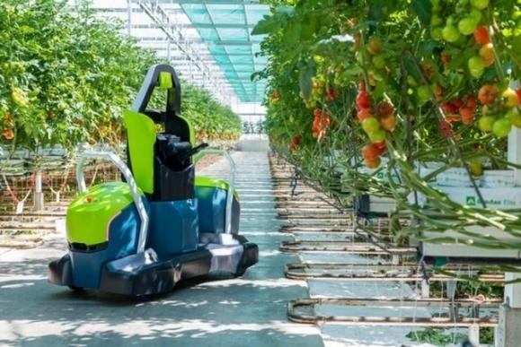 Компанія Priva розробила робота Kompano для обрізки листя з томатів  фото, ілюстрація