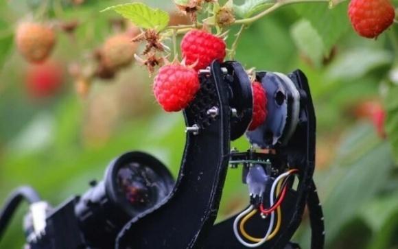 Страшный сон для заробитчан — британцы создали робота-сборщика ягод фото, иллюстрация