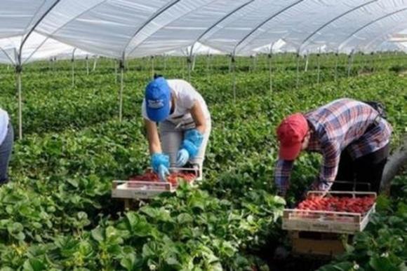 Фінляндія планує чартерами доставляти сезонних працівників з України фото, ілюстрація