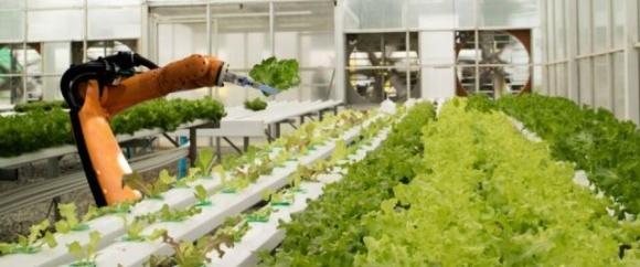 В Австралії вивчили етичний аспект використання роботів у сільському господарстві фото, ілюстрація