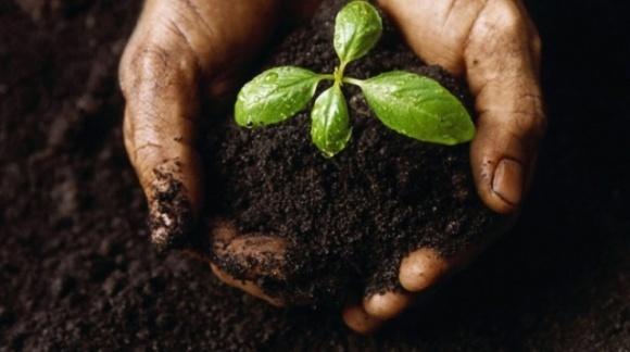 В Мінагро розробили правила забезпечення родючості ґрунтів і застосування агрохімікатів фото, ілюстрація