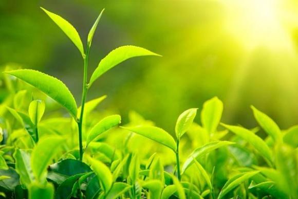 Производство растениеводческой продукции возросло на 6,9%, - Госстат фото, иллюстрация