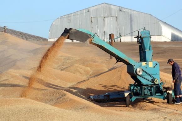 Российские аграрии будут вынуждены продавать зерно по невыгодным ценам фото, иллюстрация