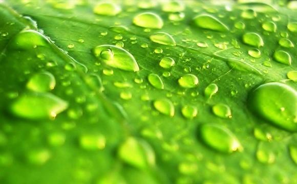 Агролайфхак: мифы о листовой подкормке фото, иллюстрация