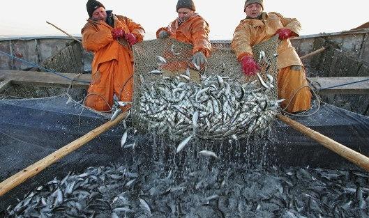 Рибні ресурси Азовського моря практично знищено, — Асоціація рибалок фото, ілюстрація