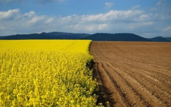 Чи загрожує Україні доля ринку землі в Аргентині? фото, ілюстрація