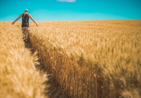 Гарячі гектари: коли країна отримає закон про ринок землі і чому мораторій на її продаж — порожній звук фото, ілюстрація