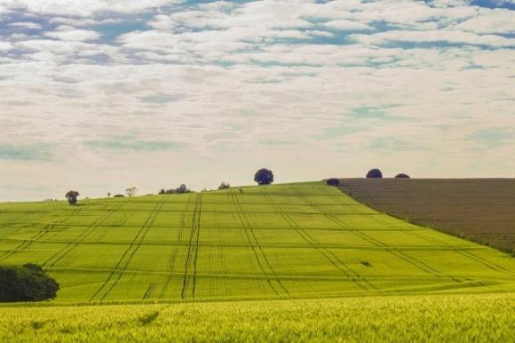 Ринок землі під питанням: Кабмін пропонує суттєво скоротити видатки на земреформу фото, ілюстрація