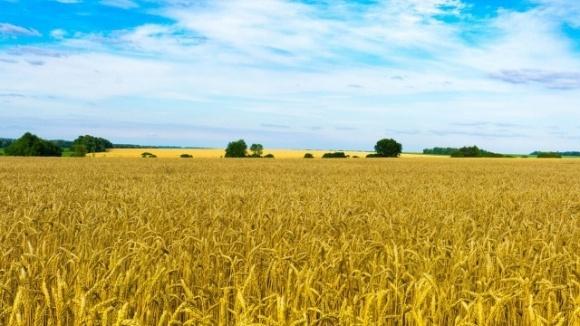 Ринок землі матиме негативний вплив на економіку України фото, ілюстрація