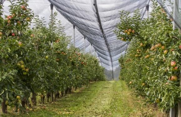 Правительство изменило порядок государственной поддержки садоводов фото, иллюстрация