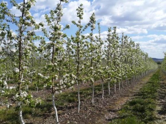 Правительство обновило механизм государственной поддержки развития садоводства, виноградарства и хмелеводства фото, иллюстрация