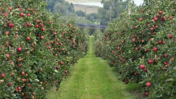 Рост садоводства происходит благодаря 20-30-летним садам фото, иллюстрация