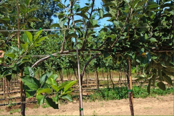 Агролайфхак для садоводов: система DaVor и ее преимущества фото, иллюстрация
