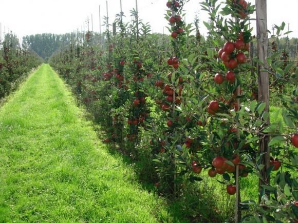 В Україні з'явилася перша аграрна розписка, оформлена садівником фото, ілюстрація