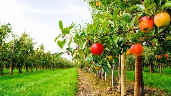 Кабмин выделил дополнительных 224 млн грн на господдержку садоводства фото, иллюстрация