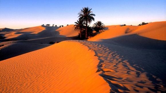 Сахара может полностью стать зеленой, - ученые фото, иллюстрация