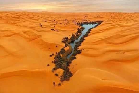 Норвежские ученые создали технологию озеленения Сахары фото, иллюстрация
