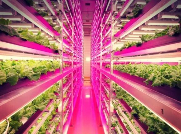В Японии построили самую большую в мире вертикальную ферму по выращиванию салата фото, иллюстрация