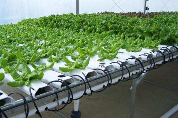 Украинские изобретатели разработали «умную ферму», способную вдвое повысить урожайность фото, иллюстрация