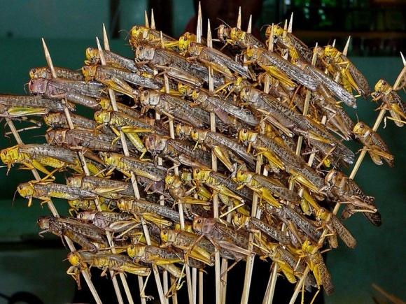 Новые спутниковые данные спрогнозируют нашествие саранчи за 2-3 месяца, - FAO фото, иллюстрация