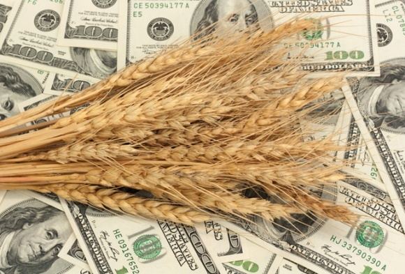 """Введение """"аграрно-сырьевого сбора"""" для экспортеров нецелесообразно, — УкраАгроКонсалт фото, иллюстрация"""