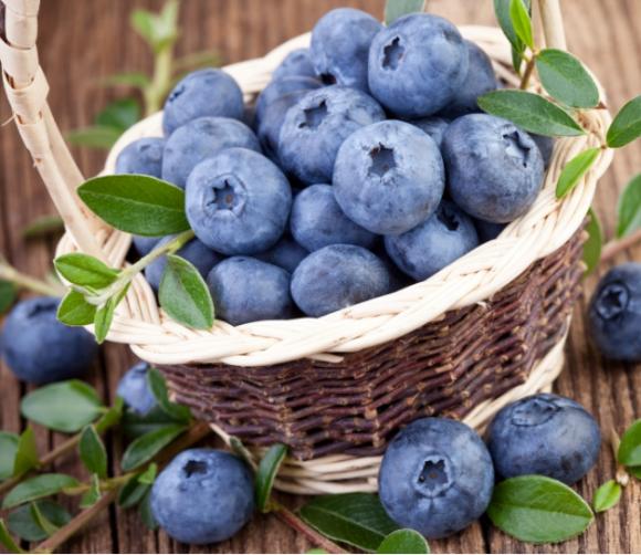 Агролайфхак: Как создать бизнес по выращиванию голубики фото, иллюстрация