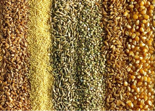 Котировки основных сельхозкультур на СВОТ 16 сентября выросли фото, иллюстрация