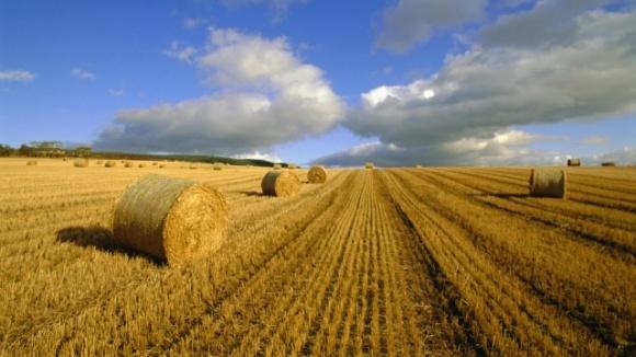 В Украине с начала года выросло сельхозпроизводство фото, иллюстрация