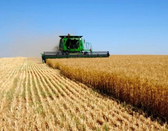 А выиграет ли от свободного рынка земли в Украине государство? фото, иллюстрация