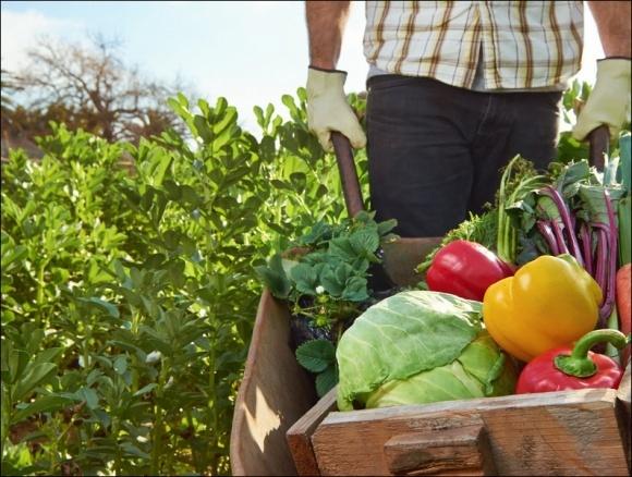В Украине планируют улучшить условия для развития семейных ферм фото, иллюстрация
