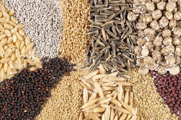 ЕС может разрешить Украине экспортировать семена в конце года фото, иллюстрация