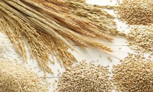 Аграрний комітет підтримав законопроєкт про сертифікацію насіння фото, ілюстрація