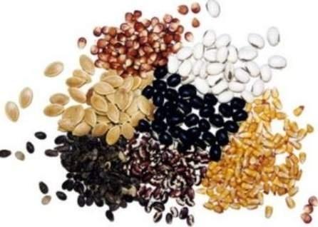 HarvEast у серпні запустить насіннєвий завод  фото, ілюстрація