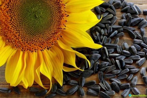 На Ровеньщине - самая высокая динамика роста производства семян подсолнуха фото, иллюстрация