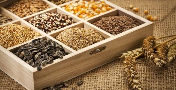 Процес сертифікації насіння буде повністю платним фото, ілюстрація