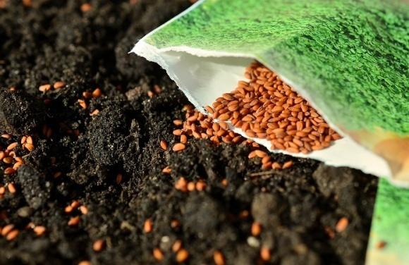 Аграрии дали Кабмину неделю на решение проблемы сертификации семян фото, иллюстрация