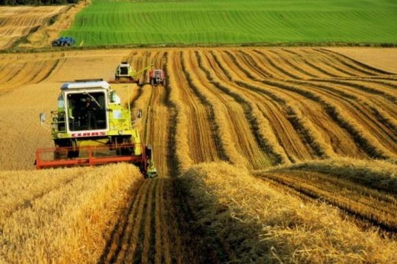 Украинское сельское хозяйство превратится в «банановую республику»? фото, иллюстрация