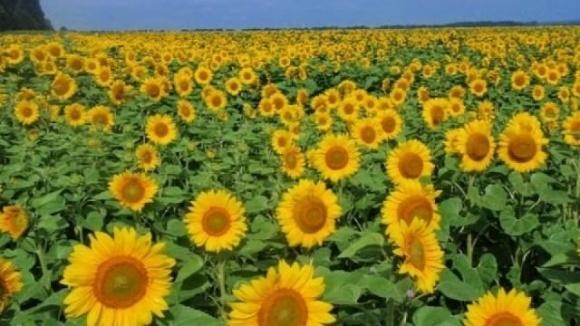 Первый транш в 26 млн евро по программе поддержки развития сельского хозяйства Украина получит в следующем году фото, иллюстрация